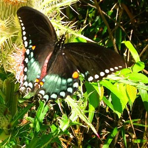 Lovely butterfly following us on our walk