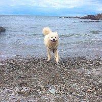 Casper enjoying Grunta beach!