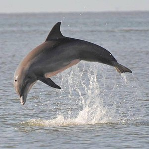 Dolphins putting on a show!