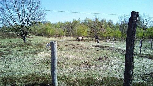 Wildpferd-Gehege