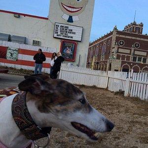 One happy greyhound!!