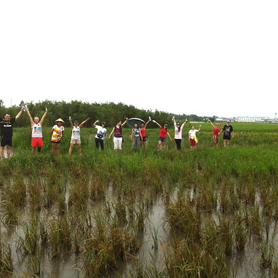 On the rice fields