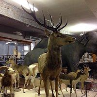 Le Musée d'Histoire Naturelle Victor Brun