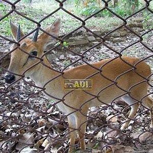 Deer Park, Inside The Park