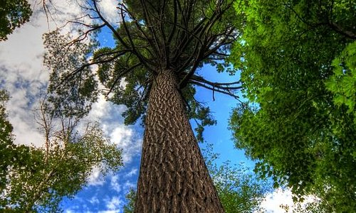 My favorite huge tree! Unique don't you think?