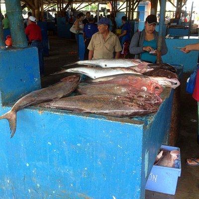 Manta Fish Market