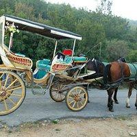この馬車に乗って島を周る至福の時間