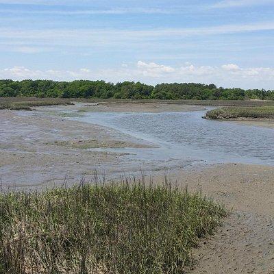 Low Tide in the Marsh