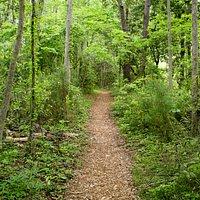A mulched path