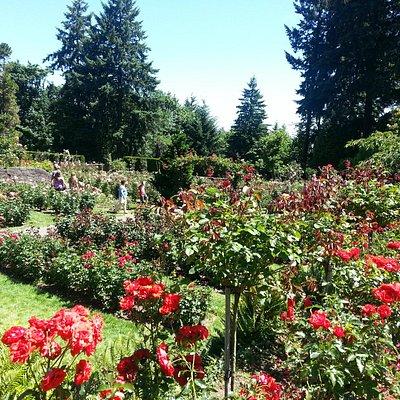 jardim de rosas