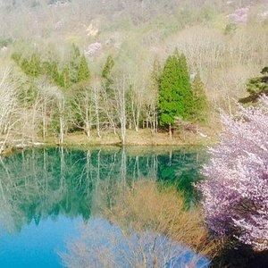 水面に映る木立と青い空、そして山桜という色のコントラスト。 風が吹いていない春の晴天日に観られる絶景です。