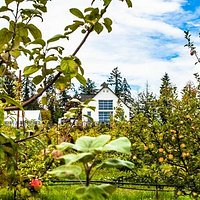 The ciderhouse from the orchard...