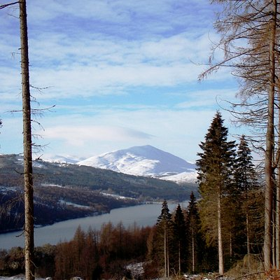 Allean Forest : Towards Schiehallion :February 2915