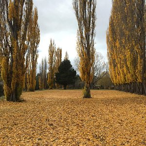 Amazing autumn colours - perfect for the keen photographer