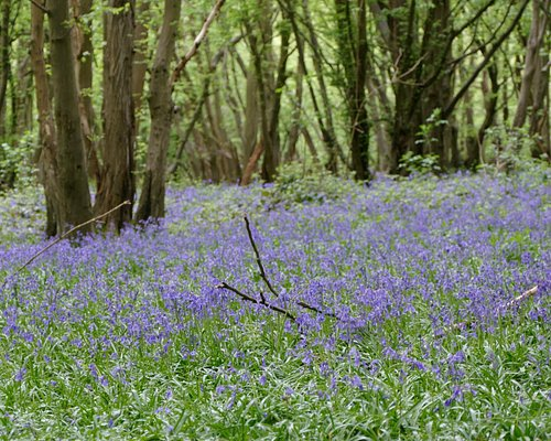 Langley Wood in Heartwood Forest, Sandridge near St Albans