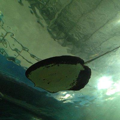 Si Sa Ket Aquarium