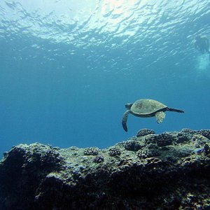 Snorkeling on the North Shore