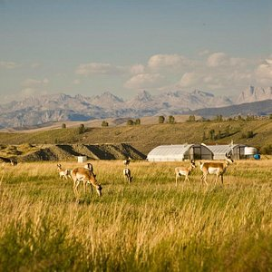 Wildlife viewing on US Route 191, Pinedale, Wyoming