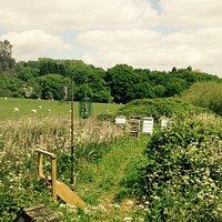 Bee hives and sheep