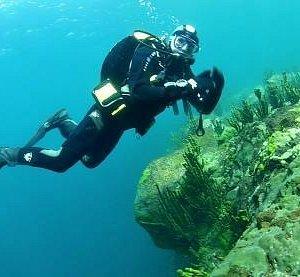 Nice diving!