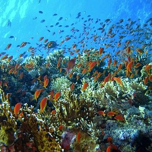 careless reef dive site by bubblemakers divers
