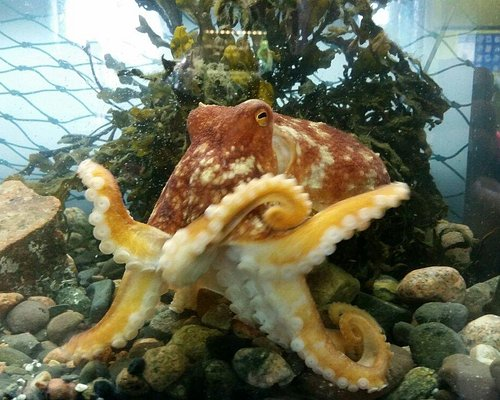Every single creature is found in and around the waters of Tobermory on the Isle of mull. Every