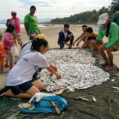 Fishermen's family and locals sorting out fish