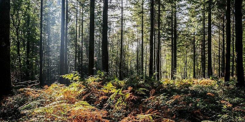 Forêt de Brocéliande - Michel Jamoneau