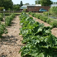 Rhubarb and soft fruit areas, Five A Day Market Garden