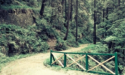 the walking/ cycling trail