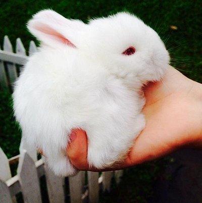 Rabbit village-Novus Giri Puncak
