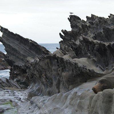 A seal relaxing at Sharkstooth Bay