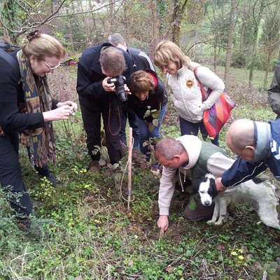 Hunting truffle in Tuscany