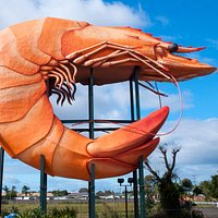 "The ""Giant"" Prawn"