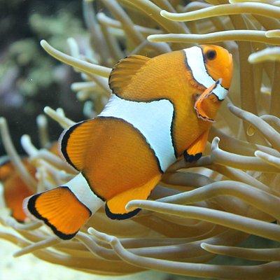 Büsumer Meereswelten