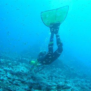 monoflossentauchen im atlantik mit gomeradivers