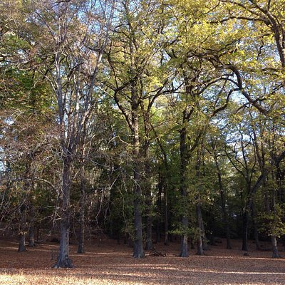 Mature oaks line the tracks and trails .  Loads of crunchy leaves to walk thru and plenty of sti