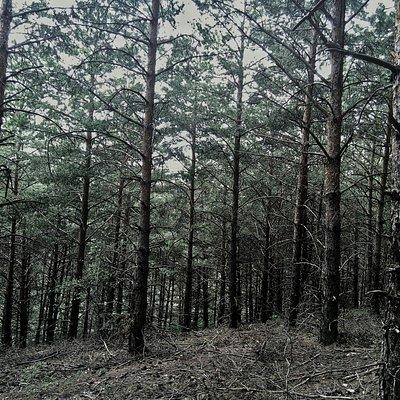 Çamlık Milli Parkı