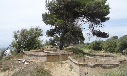 A stretch of coastal park; in foreground devices to fix the dunes