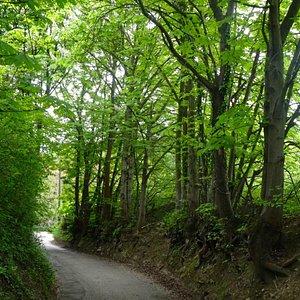 Oberer Riesenbergweg, narrow winding road from Cobenzl to Grinzing