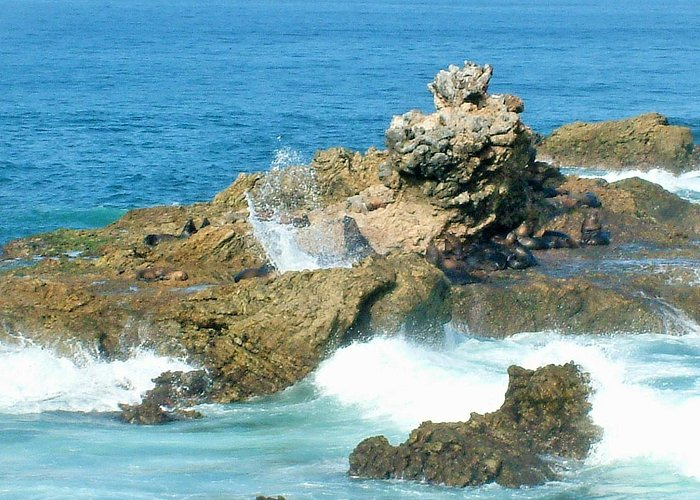 SPLASH SEA LIONS