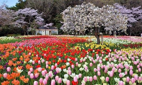 4月の花ひろば