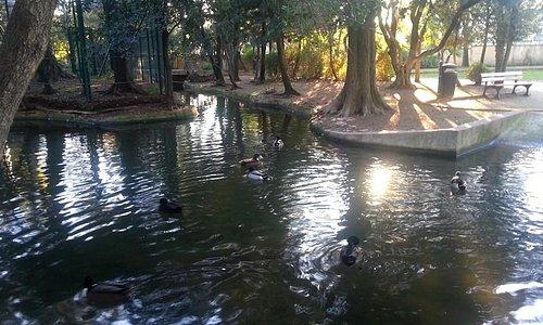 plan d'eau et ses canards