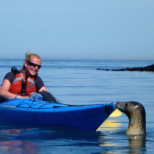 Kayaking with a seal!