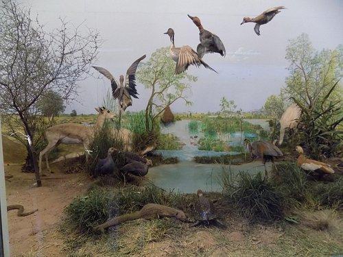 depicting water pond in desert region