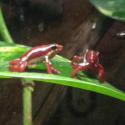 frogs at the aquarium