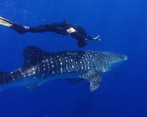 Squalo Balena / Whale Shark