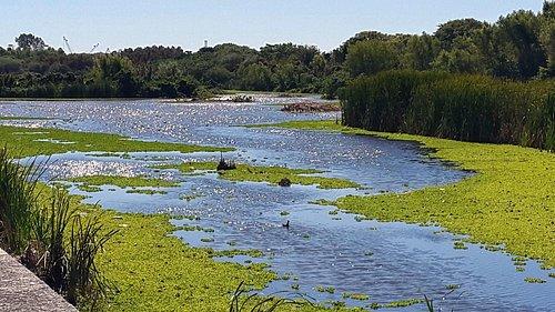 Vista de la Laguna