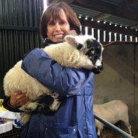 Lil Sheep