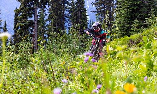 Downhill Mountain Biking in the Sun Peaks Bike Park